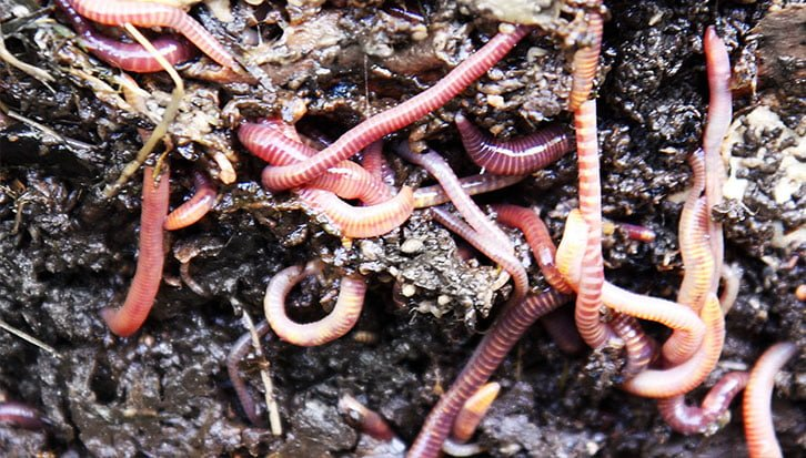 How to Take care of Worms