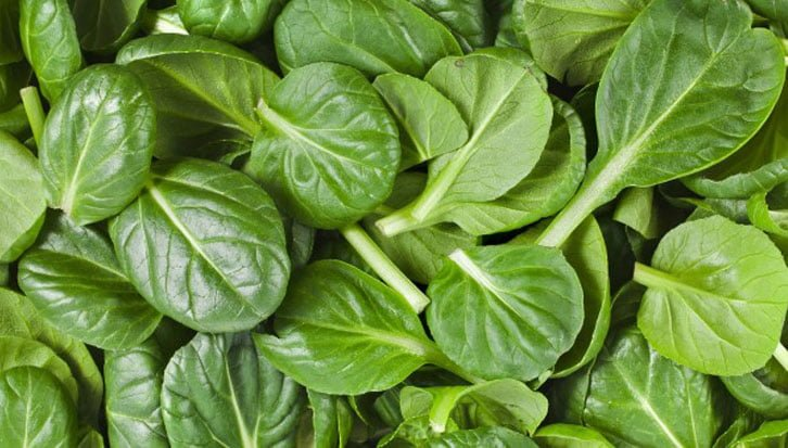 How to grow spinach plant at home