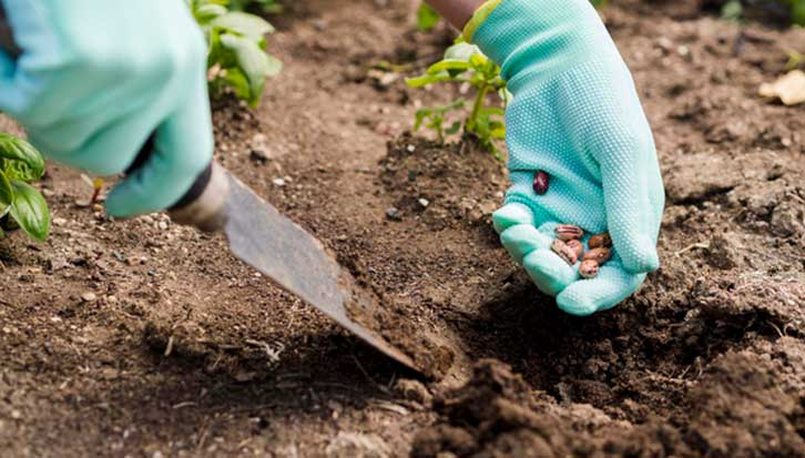 What is the Best Fertilizer for Outdoor Grow