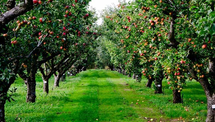 Best fertilizer for Apple Trees for Gardening