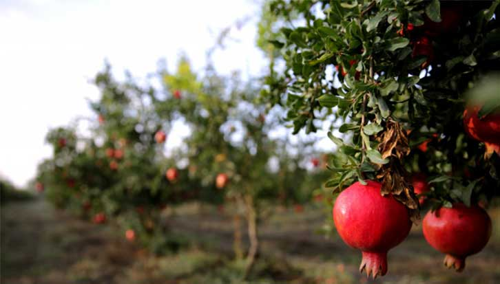 Best Fertilizer for Fruit Trees – Reviews & Buying Guide