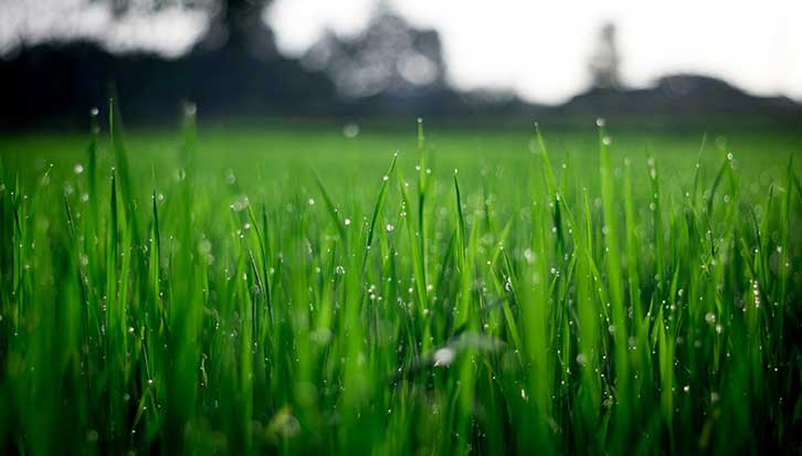 Best Fertilizer for Ryegrass Reviews & Buying Guide
